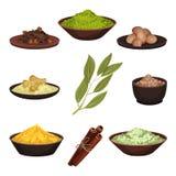 Plan vektoruppsättning av olika naturliga kryddor Aromatiska smaktillsatser för mat sockrar nuts kryddor för kanelbruna ingredien royaltyfri illustrationer