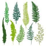 Plan vektoruppsättning av olika typer av ormbunken Ris med ljust - gräsplansidor naturliga element Lös skogväxt stock illustrationer