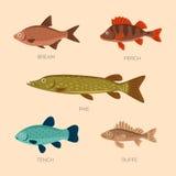 Plana fiskar för gullig tecknad film Arkivfoto