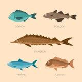 Plana fiskar för gullig tecknad film Arkivfoton