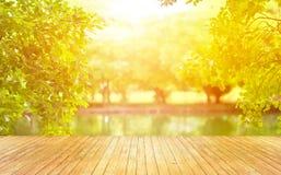Plance di legno e bello tramonto di illuminazione sul fondo verde del parco Immagine Stock
