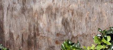 Planche en bois Images stock