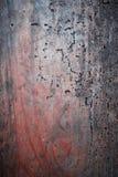 Planche en bois rougeâtre - texture avec des trous de ver photos stock