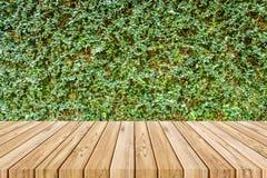 Planche en bois sur le mur d'usine de figue de rampement Photo libre de droits