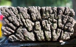 Planche en bois texturisée Photo libre de droits