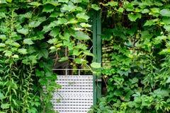 Planche las puertas, la entrada a la casa, tejida con una vid fotografía de archivo libre de regalías