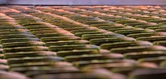 Plancher carrelé de château de Haut-Koenigsbourg - Alsace Photos libres de droits