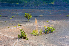 Plancher de cratère Images libres de droits