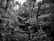 Plancher de forêt avec des roches et des fougères images stock