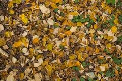Plancher de forêt couvert dans des feuilles d'automne Photographie stock