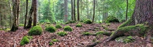 Plancher de forêt, réservation de Bucegi, Simon Valley Photographie stock libre de droits