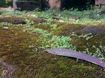 Plancher de mousse Photographie stock