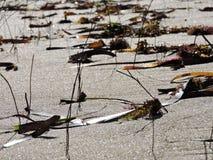 Plancher de plage Photos libres de droits