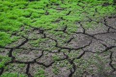 Plancher de terre Photo libre de droits