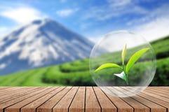 Plancher en bois avec la feuille de thé organique dans la bulle sur le beau brouillé Photo libre de droits