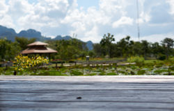 Plancher en bois avec le fond d'étang et de jardin photographie stock