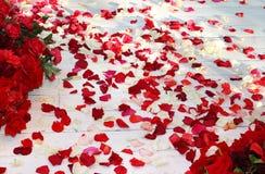Plancher en bois, répandu avec des pétales de rose Images stock