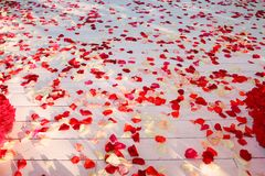 Plancher en bois, répandu avec des pétales de rose Photographie stock