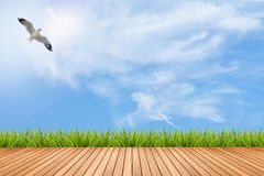 Plancher et herbe en bois sous le ciel bleu et l'oiseau Image stock