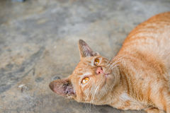 Plancher jaune de Tabby Cat Lovely Relax On The Image stock