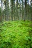 Plancher luxuriant de forêt en Finlande photographie stock libre de droits