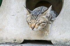 Plancher paresseux de ‹de the†de ‹d'on†de sommeil de ‹de cat†de chiot ? photographie stock libre de droits