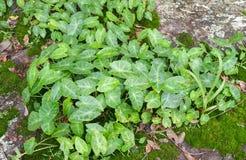 Plancher vert de mousse de feuilles Photographie stock