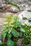 Plancher vert de mousse de feuilles Images libres de droits