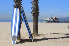 Planches de surf contre le palmier devant le pair de Santa Monica Images libres de droits