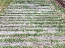 Planches en bois avec l'élevage d'herbe Photo stock