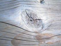 Plancia dell'albero fotografie stock