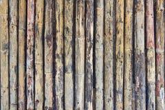 Plancia di bambù Immagine Stock