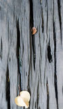 Plancia di legno bagnata della tavola con il fondo secco delle foglie Immagini Stock
