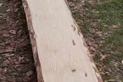 Plancia di legno del pino senza buccia prima del processo d'abrasione Fotografie Stock Libere da Diritti