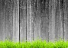 Plancia di legno ruvida in bianco e nero con erba verde Immagine Stock