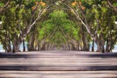 Plancia di legno sul fondo del tunnel dell'albero Fotografie Stock Libere da Diritti