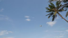 The plane flew over a palm tree against a blue clear sky. The plane flew over a palm tree against a blue clear sky stock video