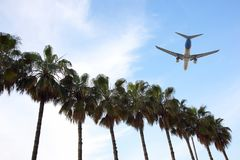Plane flies against the palm trees. The plane flies against the palm trees royalty free stock photo