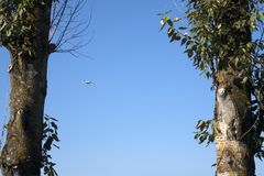 The plane flies high in the sky. Between trees stock images