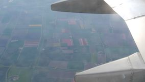 The plane flies over the beautiful fields of multicolored tulips in Holland, the view from porthole. Airplane wing in stock footage