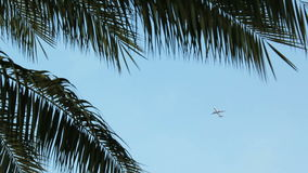 The plane flies over the leaves of the palm tree over the blue sky and then disappears from the frame. stock video footage