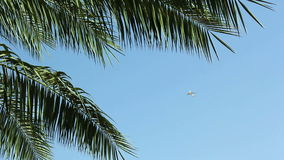 The plane flies over the leaves of the palm tree over the blue sky and then disappears from the frame. stock footage