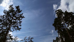 The plane flies in the sky stock footage
