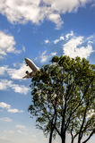 A plane fly over the tree Stock Photos