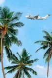 Plane flying over palm trees. Flying industry. Summer air travel. Jungle summer. Vertical photo royalty free stock photo