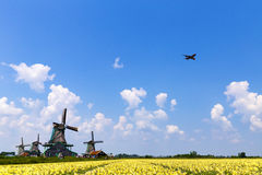 Plane flying over an yellow daffodil farm Royalty Free Stock Photo
