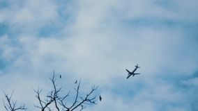 The plane is landing stock video footage