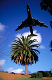 Plane Over Palm Royalty Free Stock Image