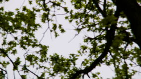 Plane over the trees stock footage
