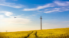 Plane over yellow rape field Royalty Free Stock Photo